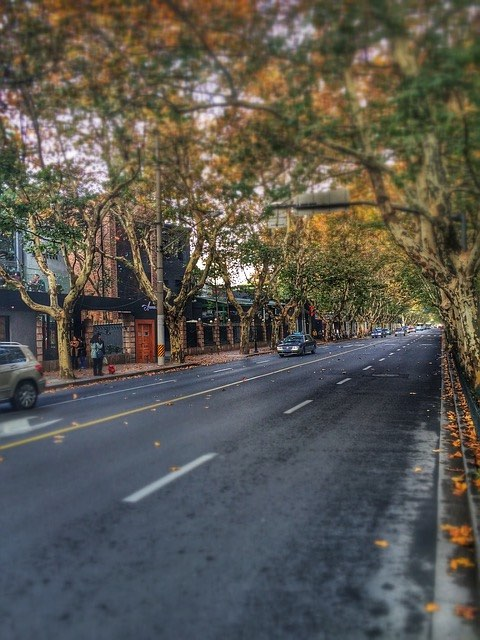tree lined streets in shanghai